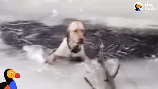 Download Dog Stuck In Icy Lake Cries To Rescuers For Help | The Dodo Video