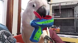 Download When A Bird Gets Mad (For No Reason) Video