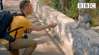 Download Why are these monkeys stealing from tourists? - World's Sneakiest Animals: Episode 2 Preview - BBC Video
