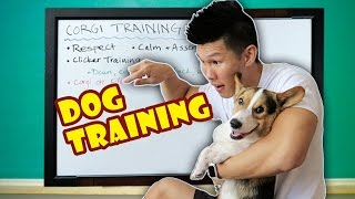 Download HOW TO CLICKER TRAIN A DOG | TEACHING a CORGI the DO's & DON'Ts Video