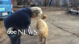 Download Homeowner finds dog upon return to property after catastrophic wildfire Video
