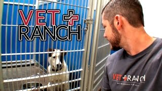 Download What If They Were All Rescued in 1 Day? Video