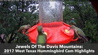 Download Jewels Of The Davis Mountains: 2017 West Texas Hummingbird Cam Highlights Video