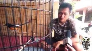 Download DUNIA HOBI : Brian Rachmad, Sejak SMP Sudah Belajar Menjadi Juri Burung Video