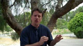 Download Churches are Illegal if 501c3 Non Profit Tax Exempt Video