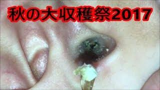 Download 2017秋の大収穫祭[耳掃除]うーちゃん Video