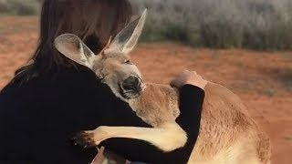 Download 10 Animals That Showed Gratefulness To The Humans Who Saved Them Video