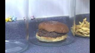 Download The Decomposition Of McDonald's Burgers And Fries. Video