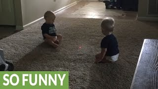Download Twins mesmerized by laser dot, chase after it Video