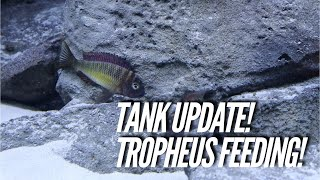 Download Update on the NEW FISH TANK & I fed some Tropheus! | Jay Wilson Video