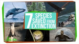 Download 7 Species That Were Saved From Extinction Video