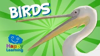 Download Birds | Educational Video for Kids Video