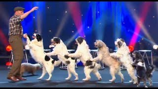 Download WOLFGANG LAUENBURGER - DRESSAGE CHIENS - LE PLUS GRAND CABARET DU MONDE Video