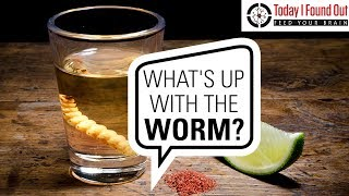 Download Who Invented Tequila and What's the Deal with the Worm? Video