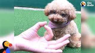 Download Dogs Doing The Snoot Challenge | The Dodo Video