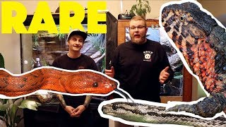 Download Unboxing the RAREST SNAKES in Canada!! Video