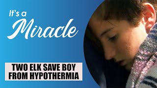 Download Two Elk Save Boy from Hypothermia - It's A Miracle - 6033 Video