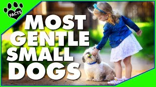Download 7 Most Gentle Small Dog Breeds - Animal Facts Video