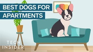 Download Best Dog Breeds For Apartment Living Video