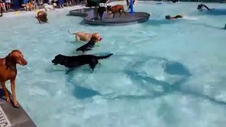 Download Pooch Pool Party Video