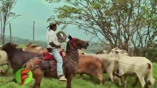 Download Consejos y tips para comprar Caballos de Trabajo para la finca - TvAgro por Juan Gonzalo Angel Video