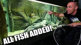 Download FISH ARE IN THE 2,000G AQUARIUM!!! Video