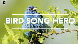 Download Bird Song Hero: The song learning game for everyone Video