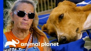 Download The Team Does Everything They Can To Save This Poor Dog's Life   Pit Bulls & Parolees Video