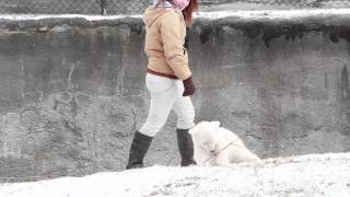 Download Buffalo Zoo Baby Polar Bear gets to play in the snow Video