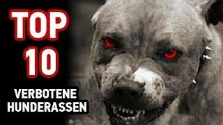 Download Top 10 Verbotene Hunderassen Video