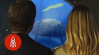 Download The Depth Below the Depths: The Aquatic World with Philippe Cousteau Video