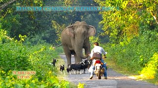 Download Behavior & chasing Of Elephant (part-1). Video
