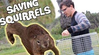 Download Trapping and Relocating Squirrels - An Examination Video