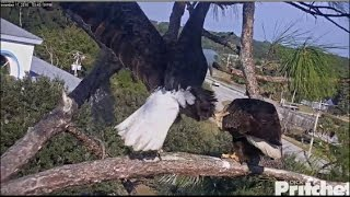 Download SWFL Eagles ~ Harriet Wants More Lovin' 11.17.16 Video