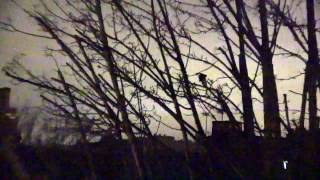 Download BIRDSONG in West London on 19TH MARCH 2017 Video