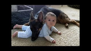 Download German Shepherd Protects Babies and Kids Compilation - The best Protection Dogs Video
