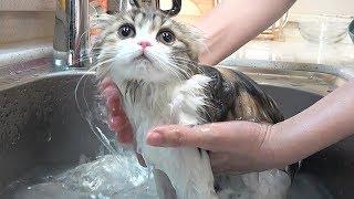 Download 순진무구한 아기 고양이 목욕하는 날 Video