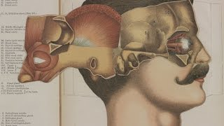 Download Lines of Thought: Understanding Anatomy Video