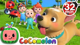 Download Where Has My Little Dog Gone? | +More Nursery Rhymes - Cocomelon (ABCkidTV) Video