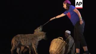 Download Feeding time with Harar's Hyena Man Video