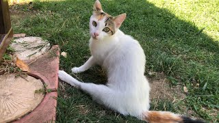 Download I followed this limping mother cat and found her whole family in the bushes!! Video