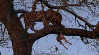 Download Pt 2 Safari Live's Sunset Safari Drive at 4:30 PM on July 11, 2017 ( Xongile & Mvula ) Video