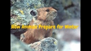 Download How Animals Prepare for Winter and Survive the Cold Video