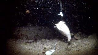 Download 夜釣りでカレイが釣れちゃいました【水中映像】 Video