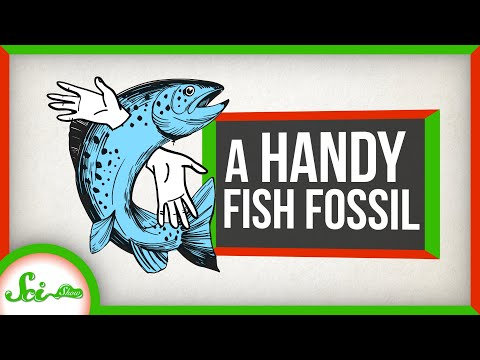 A Very Handy Fish Fossil