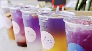 Download This Might Be the Prettiest Bubble Teahouse in Town | Te'Amo Boba Bar Video