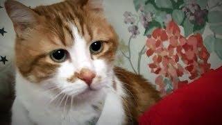 Download 怖い!家の中に何かがいる!猫が怯えて隠れるまでになった Video