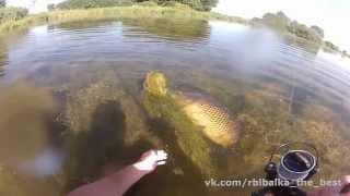 Download Вот это карп !!! Хочу туда на рыбалку !!! Video