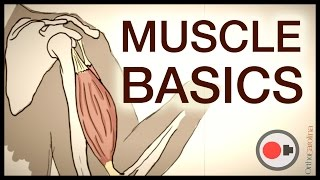 Download Muscle Basics: What Athletes Need to Know About the Muscular System Video