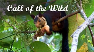 Download Call of the Wild - Promotional video Western Ghats, Kerala Video
